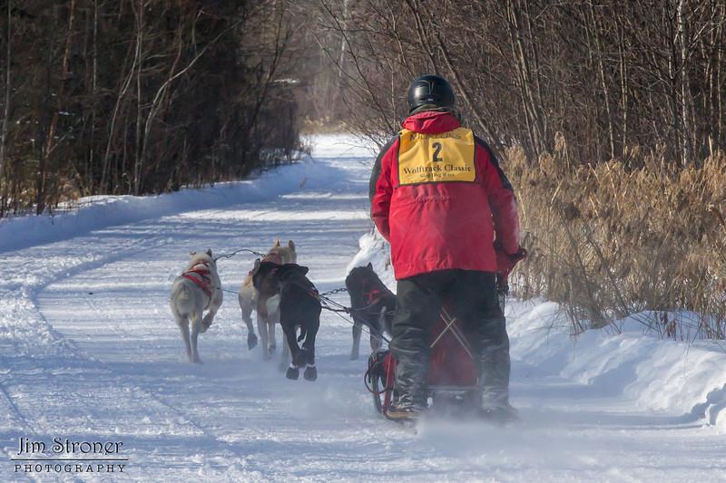 Linus Meyer's 6-dog team near the start of the 2015 WolfTrack Classic