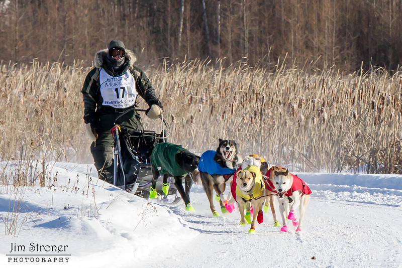 Mary Manning's 8-dog team near the start of the 2015 WolfTrack Classic