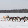 Mike Hoff's 8-dog team crossing Bear Head Lake during the 2015 WolfTrack Classic