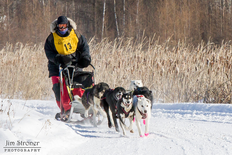 Nancy Johnson's 6-dog team near the start of the 2015 WolfTrack Classic