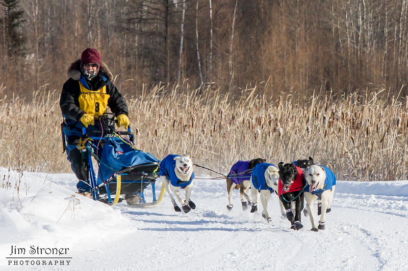 Neal Seeger's 6-dog team near the start of the 2015 WolfTrack Classic