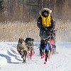 Nick Turman's 6-dog team near the start of the 2015 WolfTrack Classic