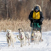 Rob Louters 6-dog team near the start of the 2015 WolfTrack Classic