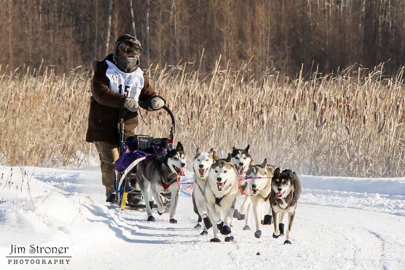 Saeward Schillaci's 8-dog team near the start of the 2015 WolfTrack Classic