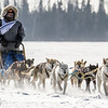 Samuel Louters 8-dog team crossing Bear Head Lake during the 2015 WolfTrack Classic