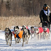 Saul Ellering's 12-dog team near the start of the 2015 WolfTrack Classic