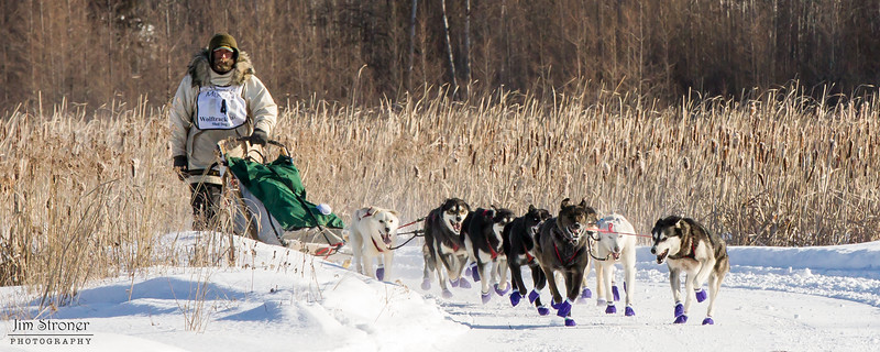 Shawn McCarty's 12-dog team near the start of the 2015 WolfTrack Classic