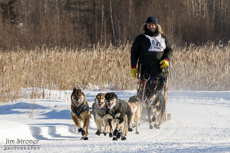 Tim Chisholm's 8-dog team near the start of the 2015 WolfTrack Classic