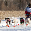Ward Wallin's 8-dog team near the start of the 2015 WolfTrack Classic