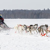 Ward Wallin's 8-dog team crossing Bear Head Lake during the 2015 WolfTrack Classic