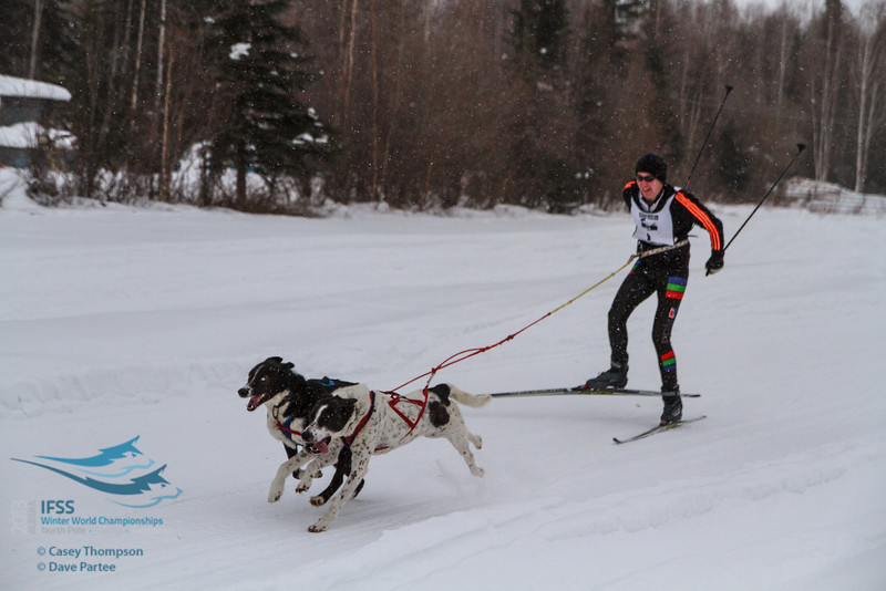 Ivar Appleman (Netherlands) - 2013 IFSS Men 2-Dog Skijor Day 1