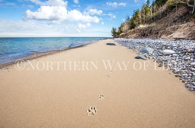 Paw prints on a stretch of Lake Michigan beach: Northport