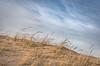 Dune Grass III