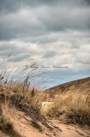 Dune Grass No 4