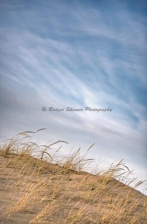 Dune Grass I