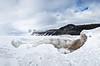 Otter Creek Ice