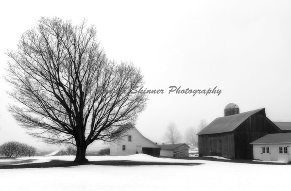 Foggy Dechow Farm