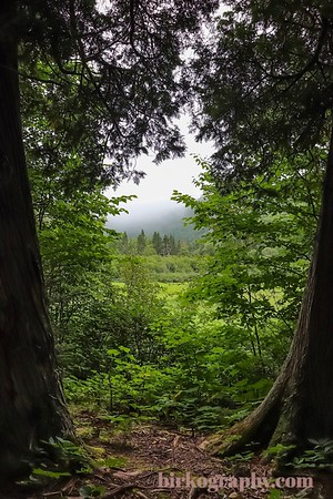 Step into the lush green clearing.  Sleeping Giant Provincial Park, ON, Canada