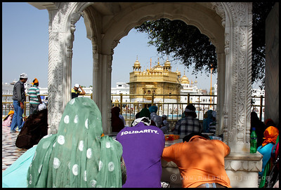 Devotee at the Harmandir Sahib (Golden temple)