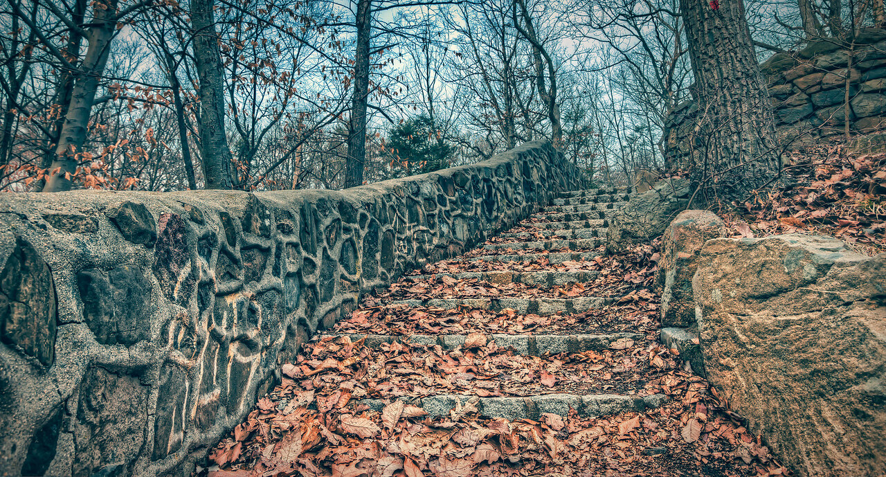 stairs in the woods..