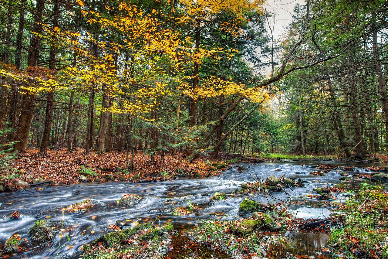 Shallow stream in Rock Hill, NY
