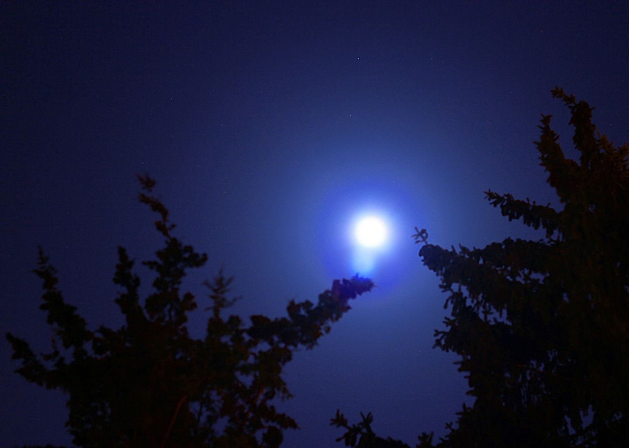 a bright moon behind the trees...