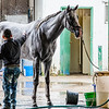 A track pony, former race horse, gets a morning bath.  07/26/2019
