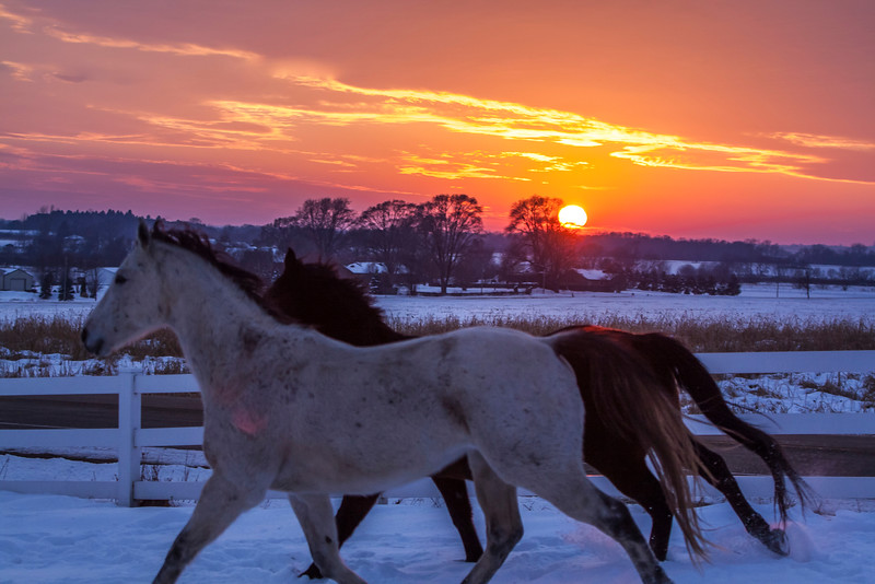 Winter Solstice Horses