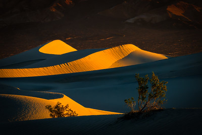 Mesquite Bushes and Mesquite Dunes at Sunrise, Death Valley National Park
