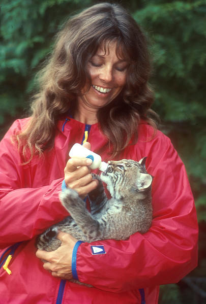 Model Released, Woman feeding Bobcat kitten