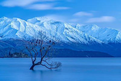 Lone Willow in Lake Wanaka