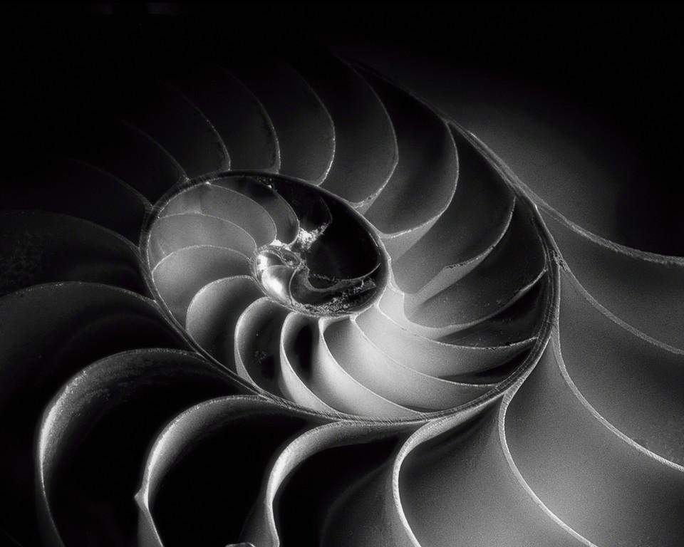 Nautilus Spiral