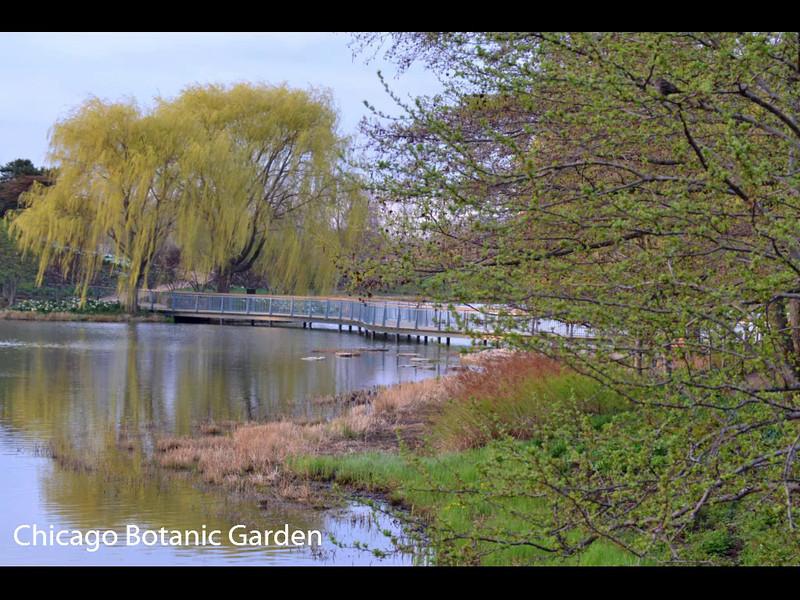 Chicago Botanic Garden   May 3, 2014
