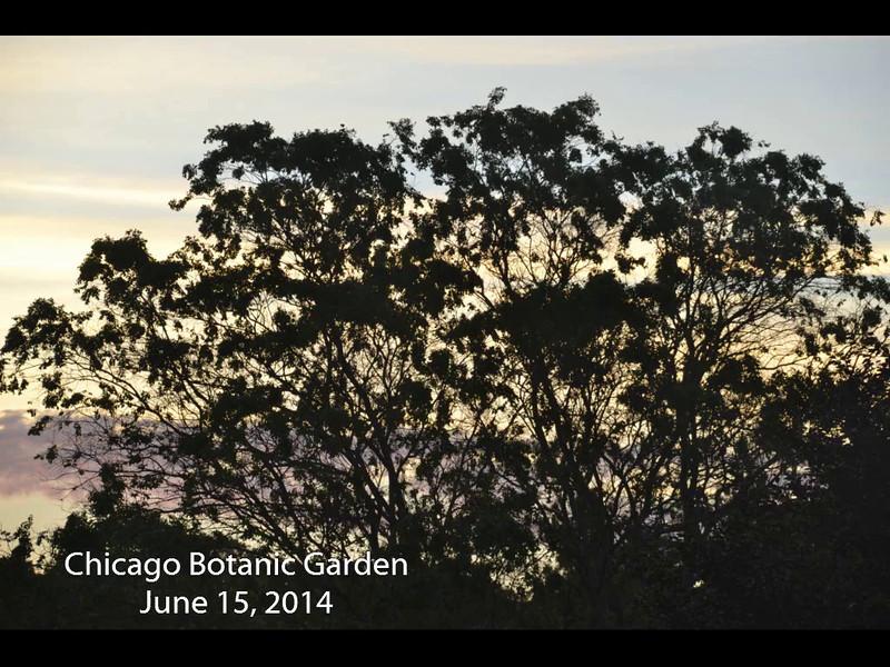 Chicago Botanic Garden   June 15, 2014