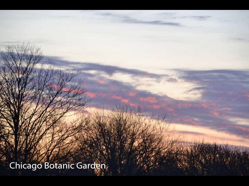 Chicago Botanic Garden   April 26, 2014