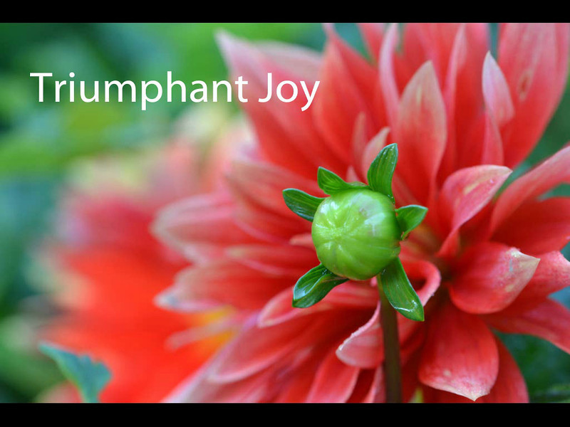 Triumphant Joy