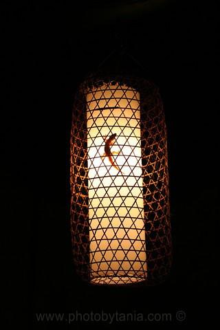 A gecko keeps warm.<br /> Hoi An, Vietnam