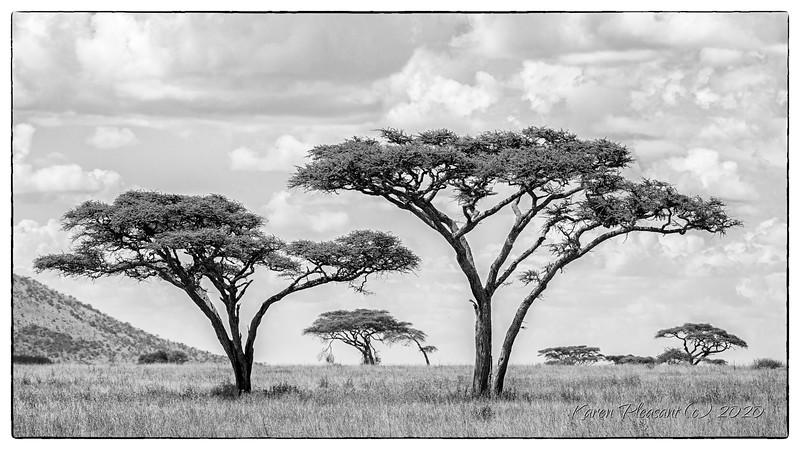 Serengeti vista