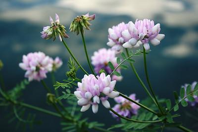 Some beautiful flower's on Seneca lake...