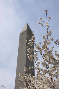 Washington monument during Apple Blossom Festival...