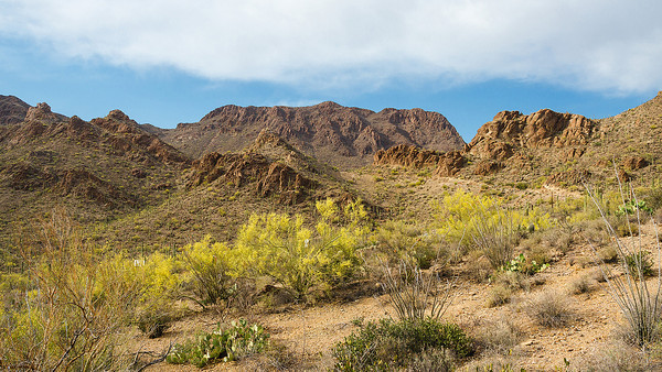 Desert of Southern Arizona