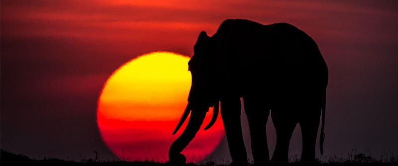 Photo of African elephant on the Maasai Mara in Kenya
