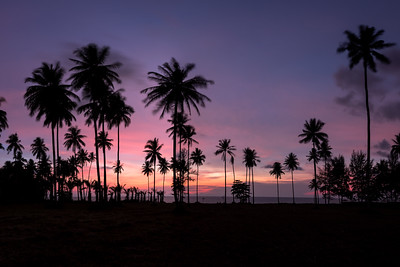 Palm tree in the sunset