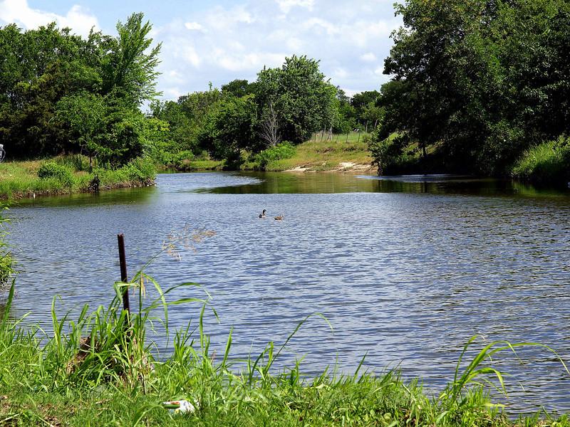 The Pond Where the Beaver Lives