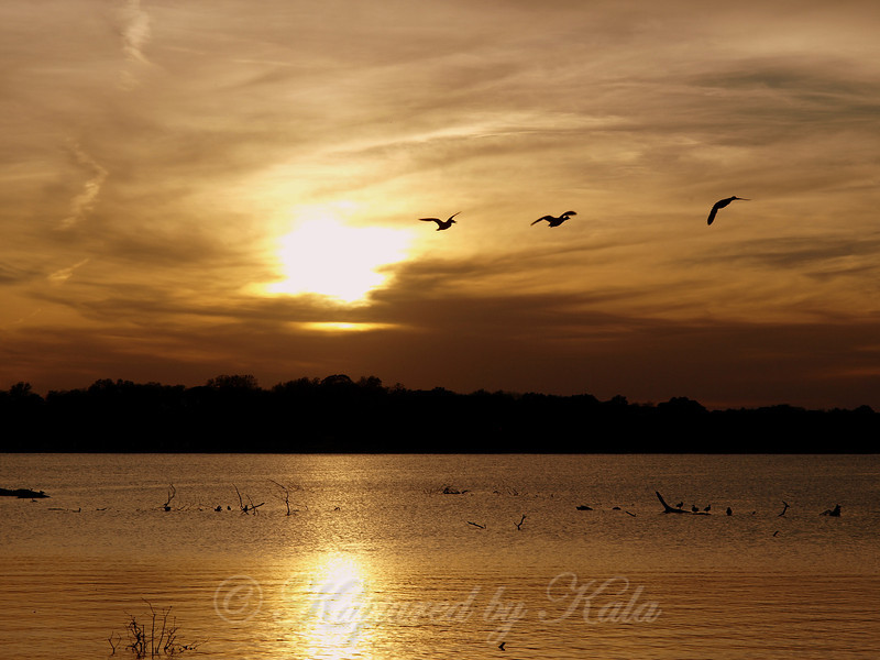 Golden Shimmer of Sunset at White Rock Lake, with Ducks