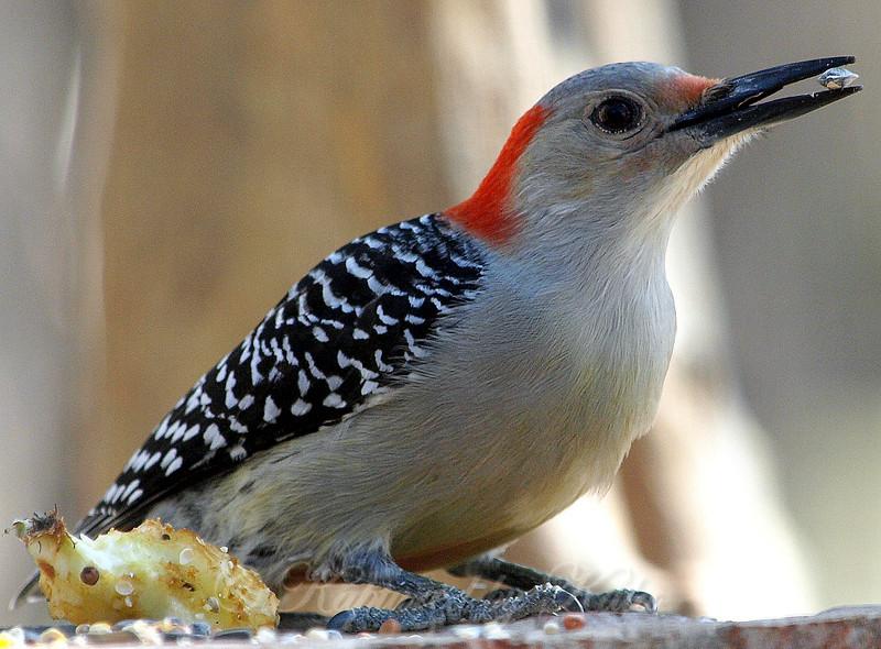 Cool, Woodpeckers Like Sunflower Seeds