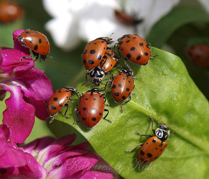 Lady Bug Traffic Jam