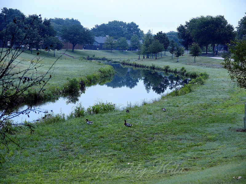 Duck Creek at Dawn With a Little Fog
