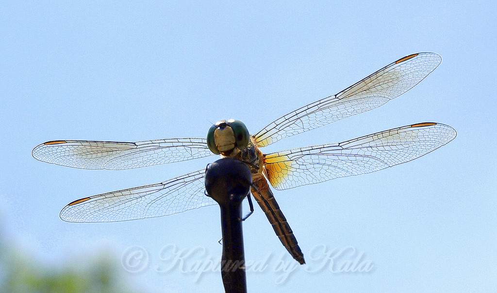 My First Dragonfly Photo