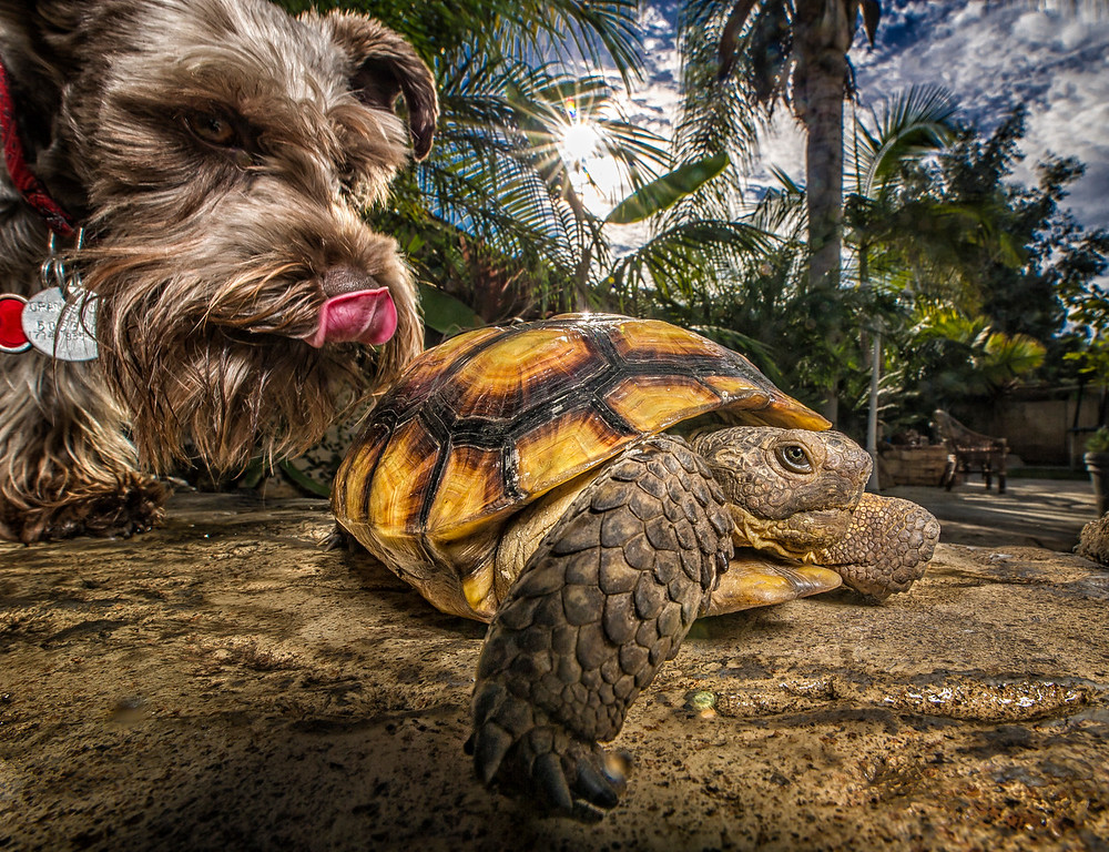 Dogs Turtle and Clint-063-Edit